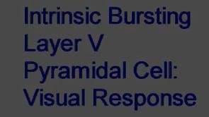 Intrinsic Bursting Layer V pyramidal cell. Response to visual stimulus