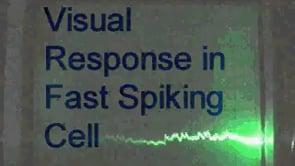 Fast Spiking non-pyramidal cell. Visual responses